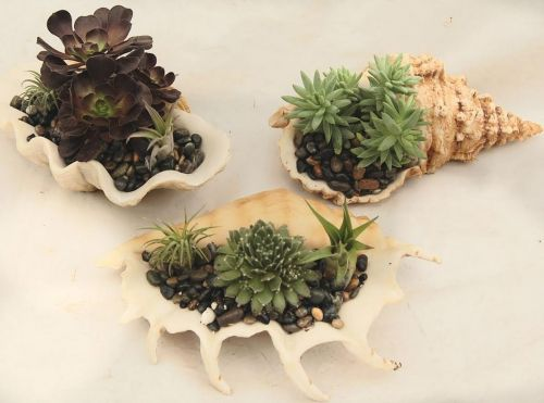 shell-centerpieces-home-depost