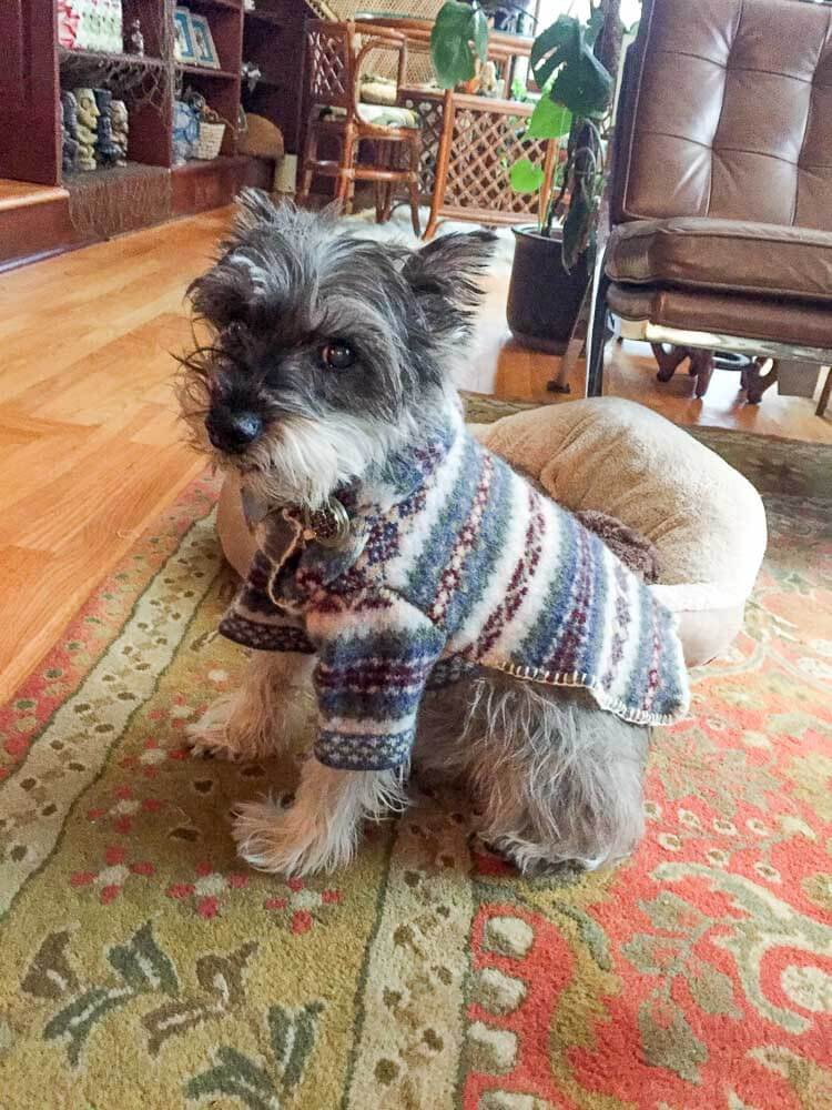 felted wool dog sweater