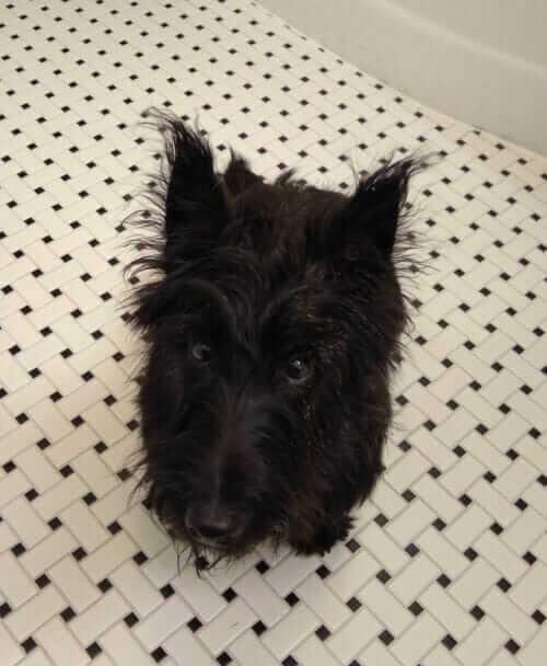 dog photo bomb bathroom